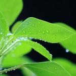雨粒と緑の輝き
