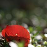 紅葉 on 緑葉