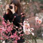 梅林のカメラ女子