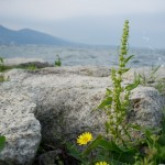 湖岸の花 (LR3)