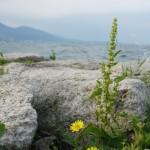 湖岸の花 (Provia)
