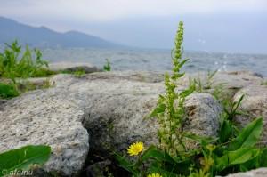 湖岸の花 (Velvia)
