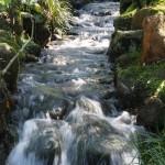 名園の小川