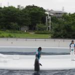 新幹線と競演