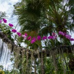 Tropical Flower Line