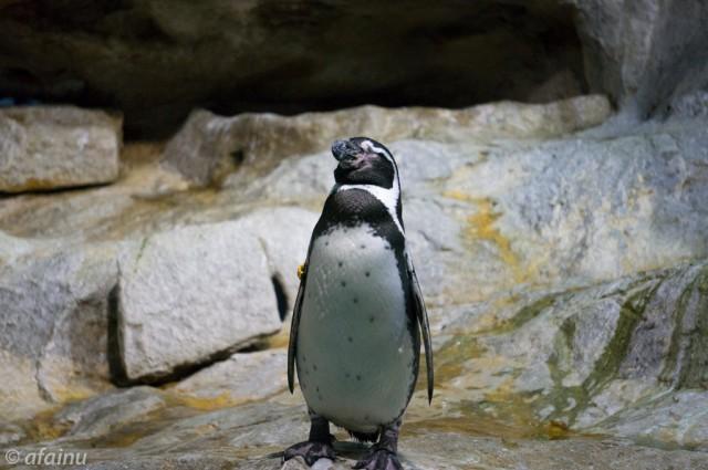 Meditating Penguin