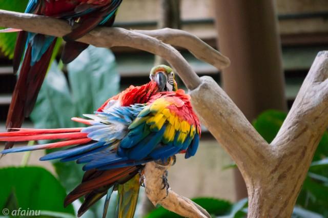 Whispering Parrot
